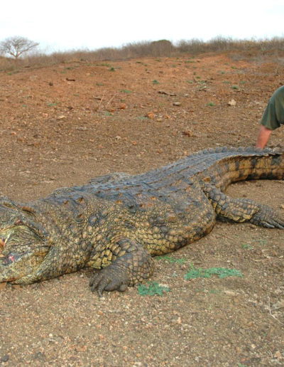 2019-Crocodile-image002_2